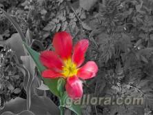 Цветовой акцент-01