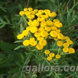 10 полезных настоев и отваров для борьбы с вредителями и болезнями растений.