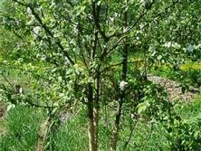 спасенное дерево-01