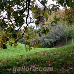 Любимый уголок природы осенью