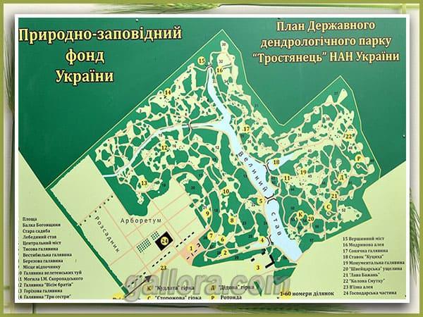 Карта схема дендропарка