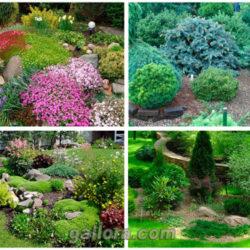 7 интересных идей для дачи и огорода.
