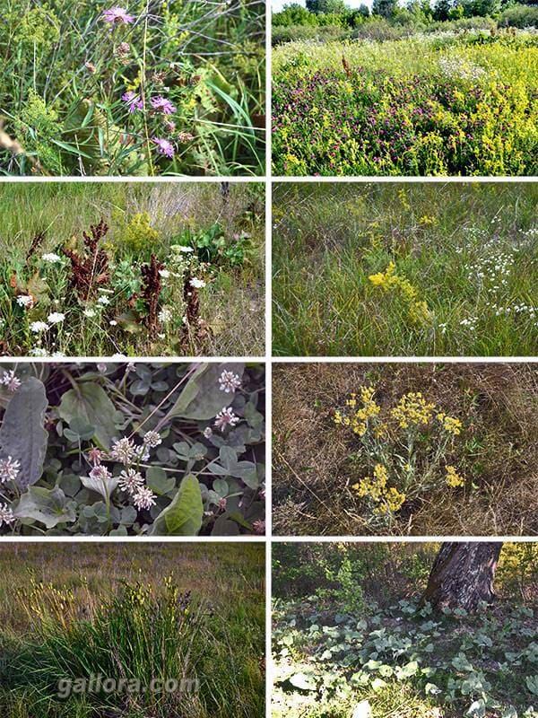 деснянские травы