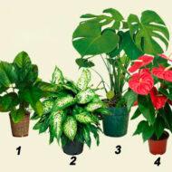 Опасные комнатные растения в вашем доме