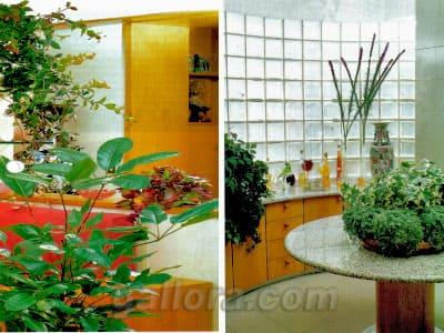 комнатные растения в доме
